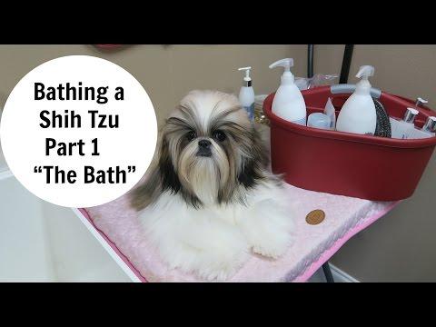 Bathing a Shih Tzu- Part 1- The Bath