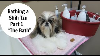 Bathing a Shih Tzu Part 1 The Bath