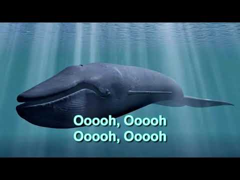 Blue Whale Theme Song With Lyrics