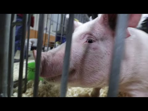 BIGGEST FARM SHOW in the US - The PA Farm Show