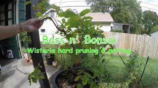 wisteria how to create bonsai tree for beginners
