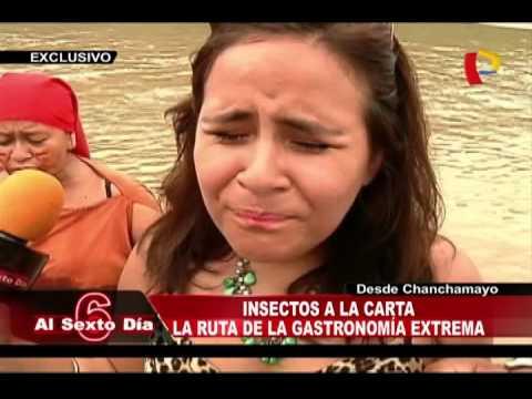 Insectos A La Carta: La Ruta De La Gastronómica Más Extrema