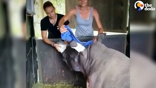 Baby Rhino Shot By Poachers Gets Rescued