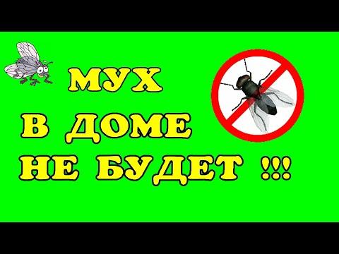 Как прогнать мух из дома в домашних условиях