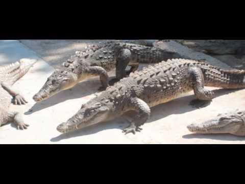 Jamaica Swamp Safari Feature