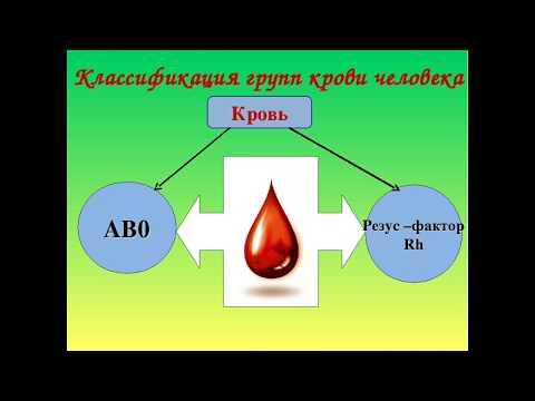 Наследование групп крови и резус фактора. Генетика крови.