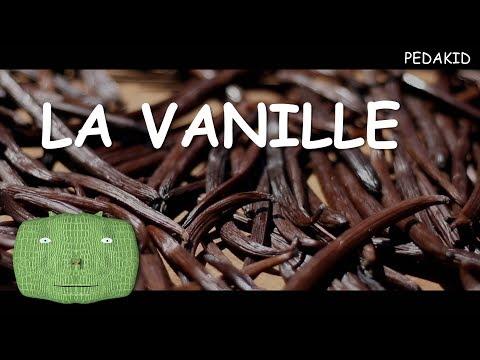 PEDAKID - LA VANILLE (vidéo pédagogique)
