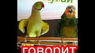 Попугай говорит. Приколы.