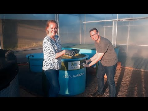 Aquaponics: A Tour In Our Farm - AQP BRASIL - Rosoma Project In Brazil