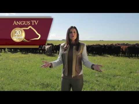 ANGUS TV PROGRAMA 20 - O Canal Oficial da Raça Angus