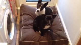 Testimonial For Ferndale Woofy Cushion Dog Bed From 4legsonline