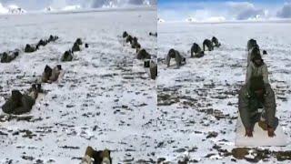 Watch: Indo-Tibetan border police perform Yoga at 18,000 feet in Ladakh | Oneindia News