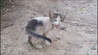 A lost kitten starving and asks for help