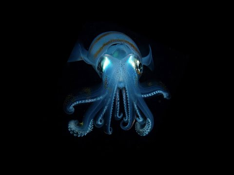 What Comes Out at Night? (Belize Underwater, Radio Narration)