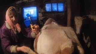 Лечим корову от лёгочных гельминтов.