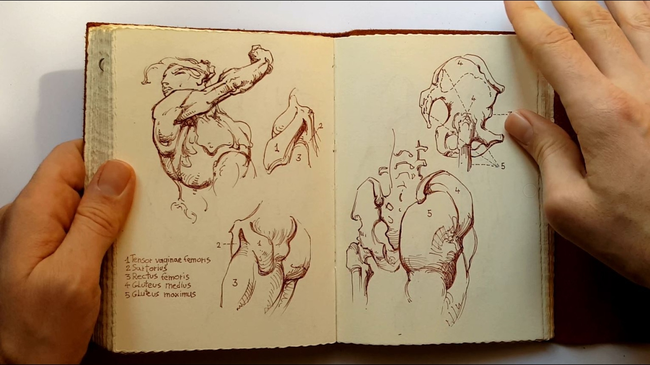 Sketchbook Constructive Anatomy George Bridgman Youtube