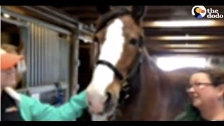 LIVE: Horse Live Stream at Gentle Giants Draft Horse Rescue | The Dodo