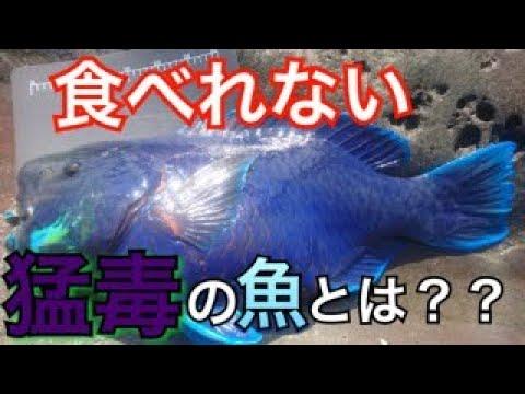 【警告】絶対食べるな!有毒な魚6グループとは?【魚突きと海の危険生物 PART4】