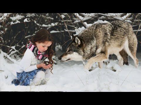 Эта девочка НЕ ДОЛЖНА была дожить до нового года, но волчица ЧУДОМ повернула болезнь ВСПЯТЬ