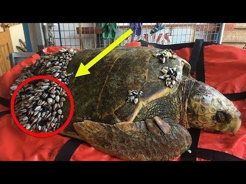 Balıkçılar Suda Yüzen Kaplumbağayı Gördüklerinde Umutsuzca Yardıma İhtiyacı Olduğunu Fark Ettiler