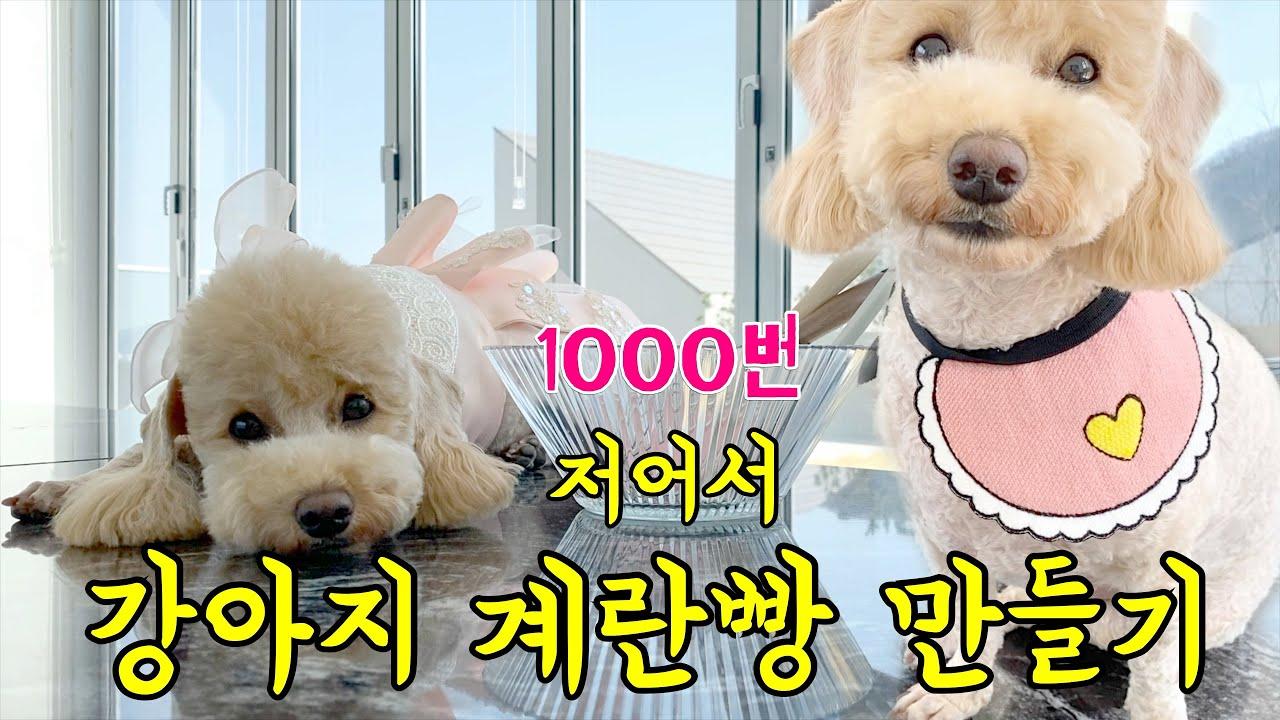 크림푸들 푸푸의 집콕 브이로그 | 1000번 저어 만드는 강아지 계란빵 도전 | Fun Cooking For My Dog