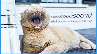 5 Sounds Cats Make and What They Mean | HQ