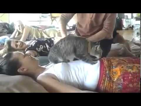 un chat sp cialiste en massage en thailande youtube. Black Bedroom Furniture Sets. Home Design Ideas