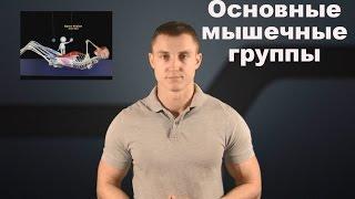 видео Анатомия мышц и мышечные группы. Как растут мышцы? [Часть 2]