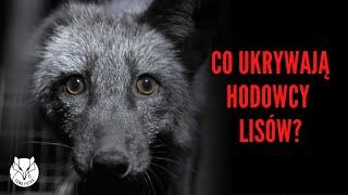 [ZOBACZ] Film, którego hodowcy lisów nie chcą, żebyś zobaczył - Śledztwo Otwartych Klatek