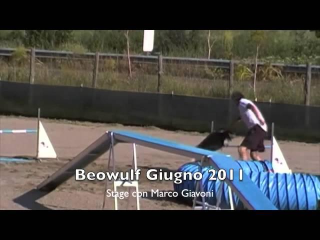 stage agility dog giavoni beowulf di petrademone border collie.m4v