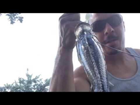 Fishing in Pembroke pines