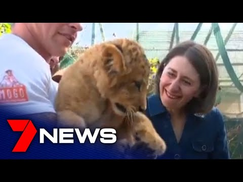Mogo Zoo Opening To The Public After Closure Due To NSW Bushfires    7NEWS