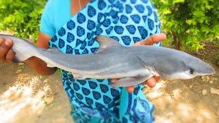 Traditional SHARK FISH Biryani Cooking in My Village | Prepared By Mummy | VILLAGE FOOD