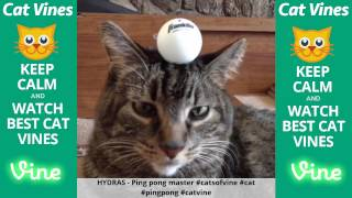 Funniest Cat Vines #90 - Updated September 1st, 2015