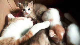 Baby cat mother love #babies #love #care #mother#cute cat