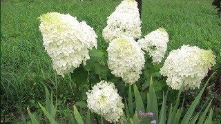 видео Всё лучшее от нашего сайта - вашему саду! Теплицы, биотуалеты, компостеры