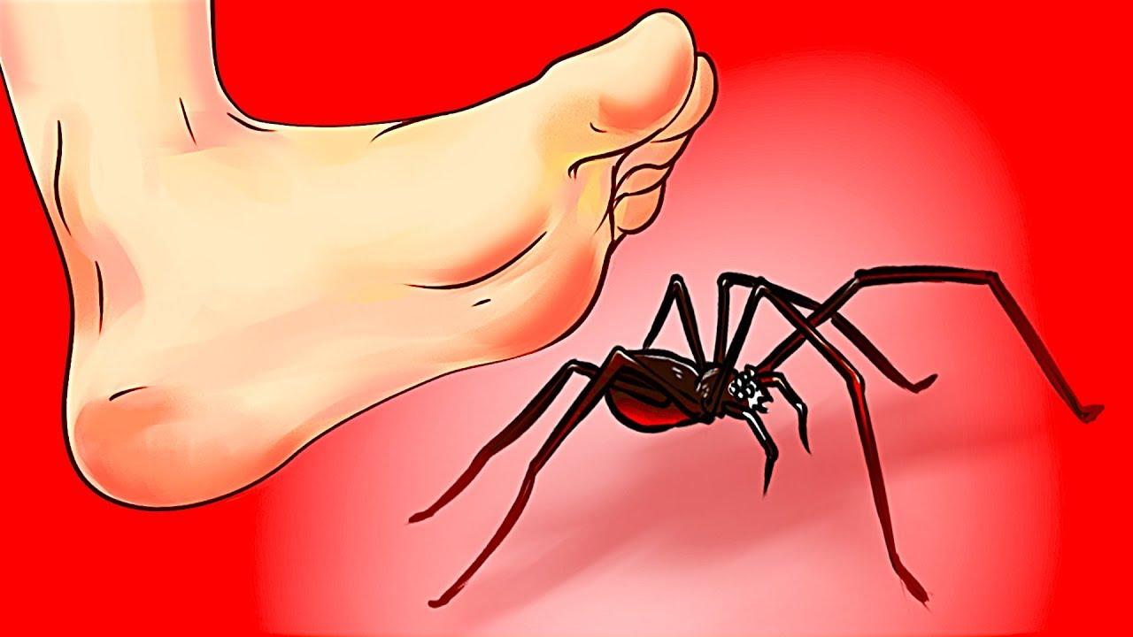 Што да правите кога ќе видите пајак?