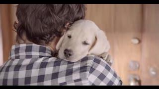 Comercial Budweiser - Amizade entre cachorro e homem - (Amigos estão esperando)