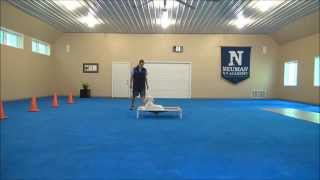 Daisy (standard Poodle) Puppy Camp Training Video