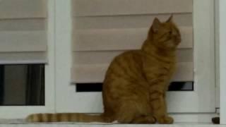 Так у нас коты ходят на улицу. Через окно спальни.