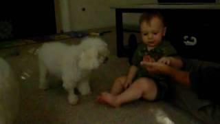 Connor feeding the dog cheerios