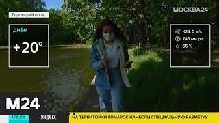 """""""Утро"""": до 20 градусов тепла ожидается в Москве в пятницу - Москва 24"""