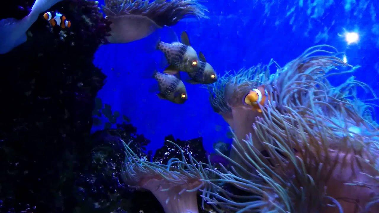 Fish aquarium in niagara falls - Niagara Falls Aquarium