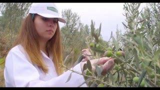 İlhan Sarı Organik Zeytin Çiftligini Geziyoruz, Organik Zeytinyağ Nedir ?