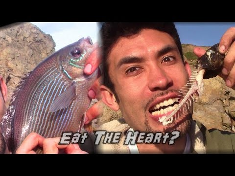 Catch and Cook! Eating a Fish's Beating Heart!!