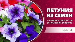 петуния из семян  новинки расцветок