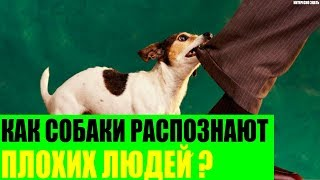 Как собаки распознают плохих людей?