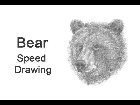 black bear white plains speed dating