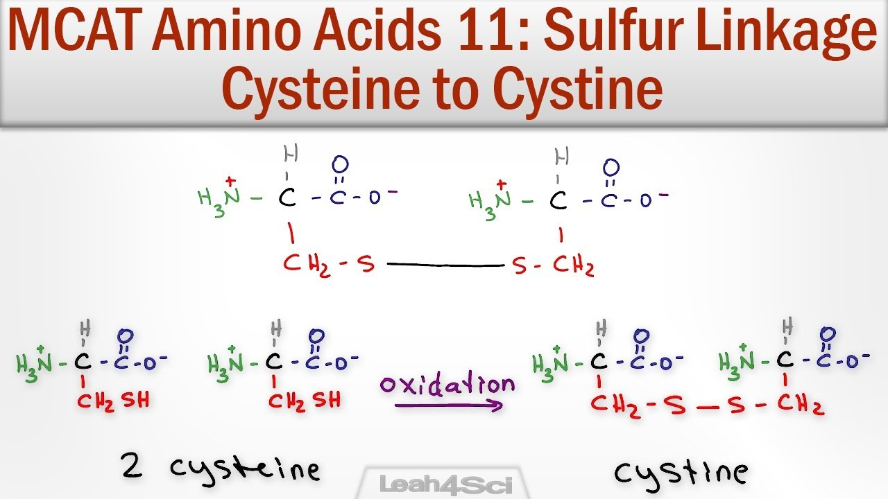 disulfide bridge formation cysteine to cystine youtube