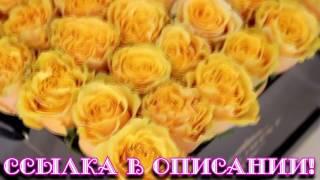 Розы хамелеоны! Цветы, меняющие цвет от смены температуры! Купить в Москве!